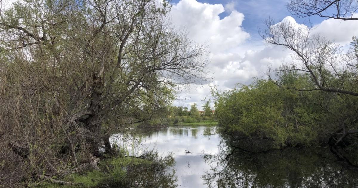 Coronavirus tips: Take a walk at Madrona Marsh in Torrance